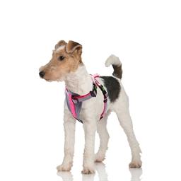 Harnais confort chien : 2 coloris