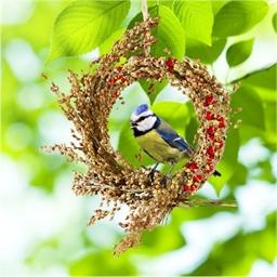 Snack pour oiseaux