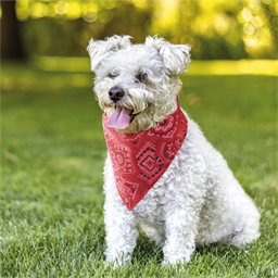 Collier pour chien bandana Rouge ou Bleu